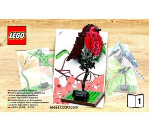 LEGO Birds Set 21301 Instructions