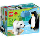 LEGO Zoo Friends Set 10501 Packaging